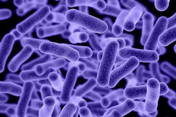 Microbioma Intestinale