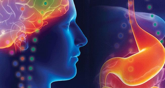 Asse intestino cervello